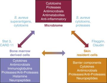 urothelial inverted papilloma pathology outlines localizarea giardiozei în organism