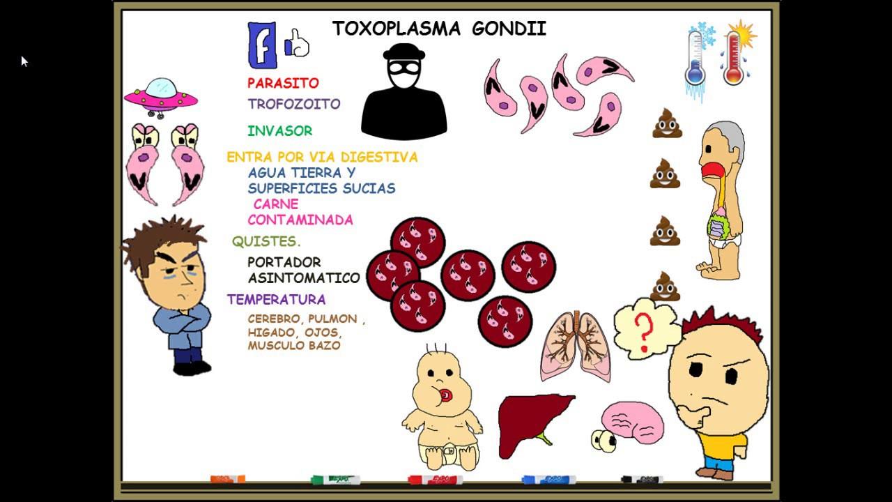 Toxoplasma gondii IgG - Anticorpi