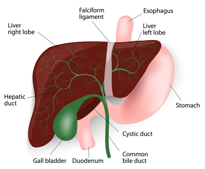 Cancer of hepatic duct