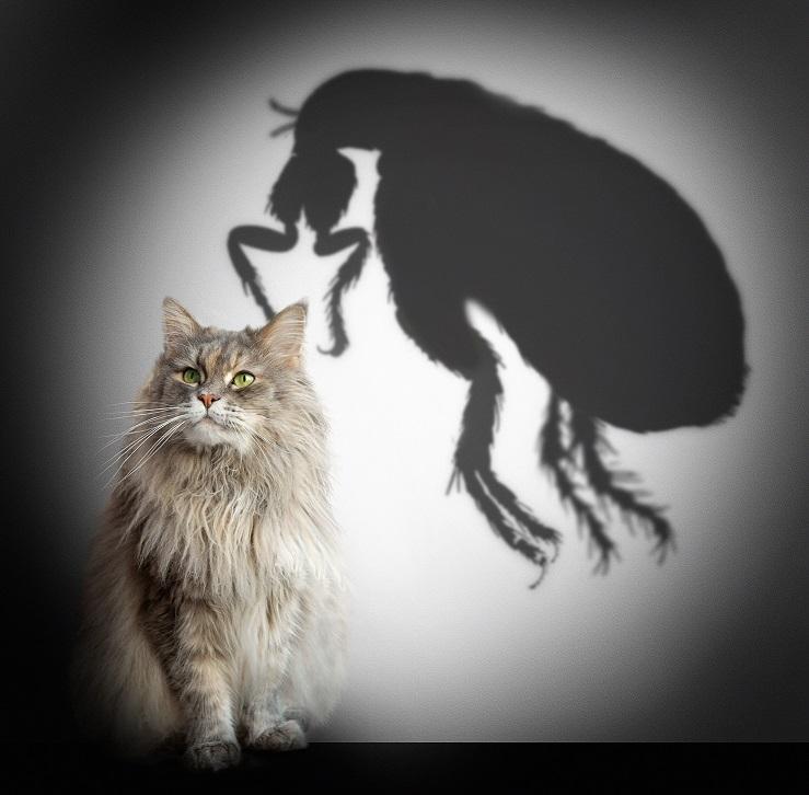 crevni paraziti kod macaka)