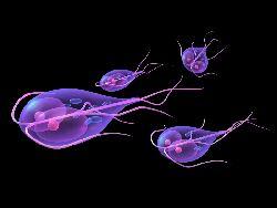 bacterii giardia în oameni)