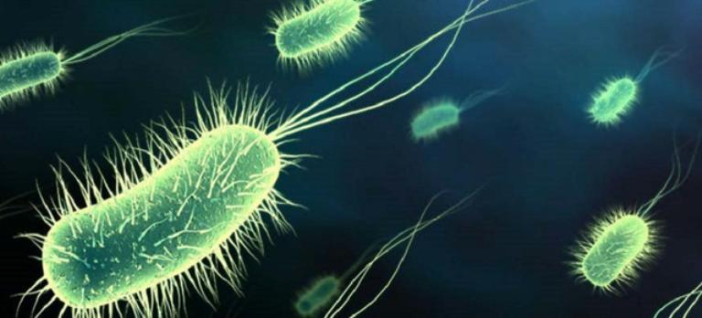 hpv virus vorter hpv warzen im rachen