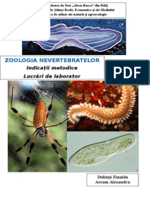 Vierme rotunde din gură - Oxiuroza (Enterobioza)
