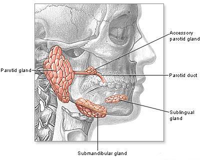 Cancer glande salivare simptome. Cancerul glandelor salivare
