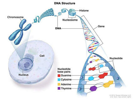 cancer and genetic links giardia mensch