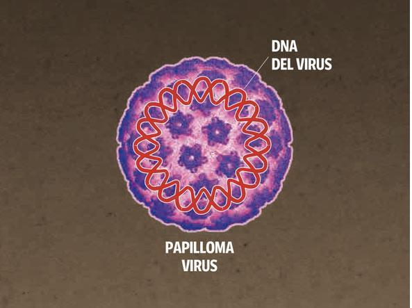 papilloma virus cancerogeno)