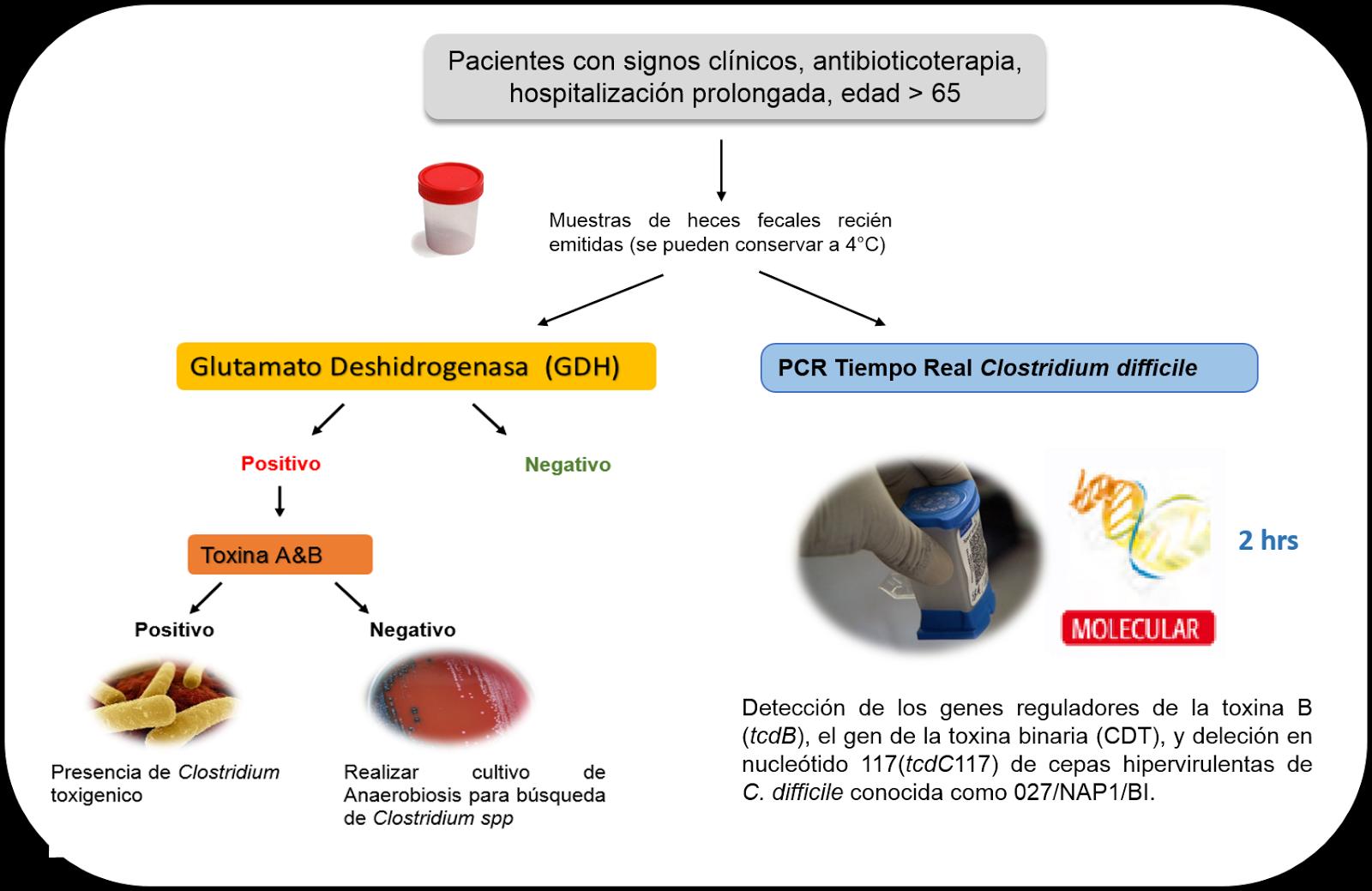 Clostridium difficilae toxina A/B in materii fecale | Regina Maria