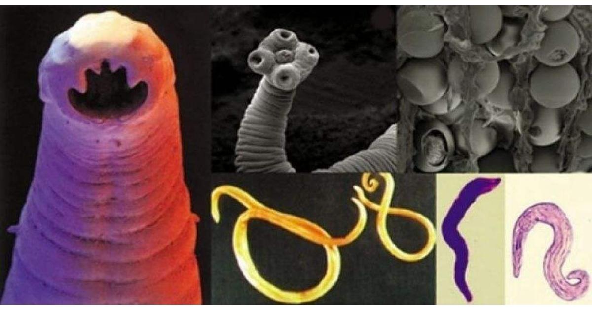 Produse derivate din paraziți din organism, Tratament cu paraziti cu produse nsp