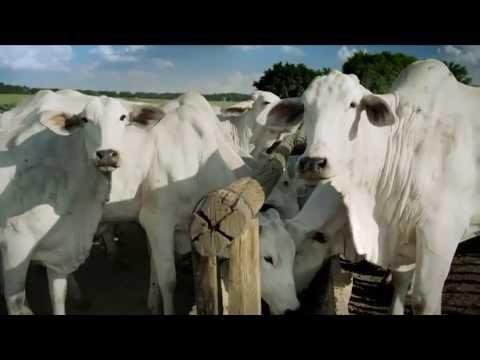 papilomatosis bovina es zoonotica)