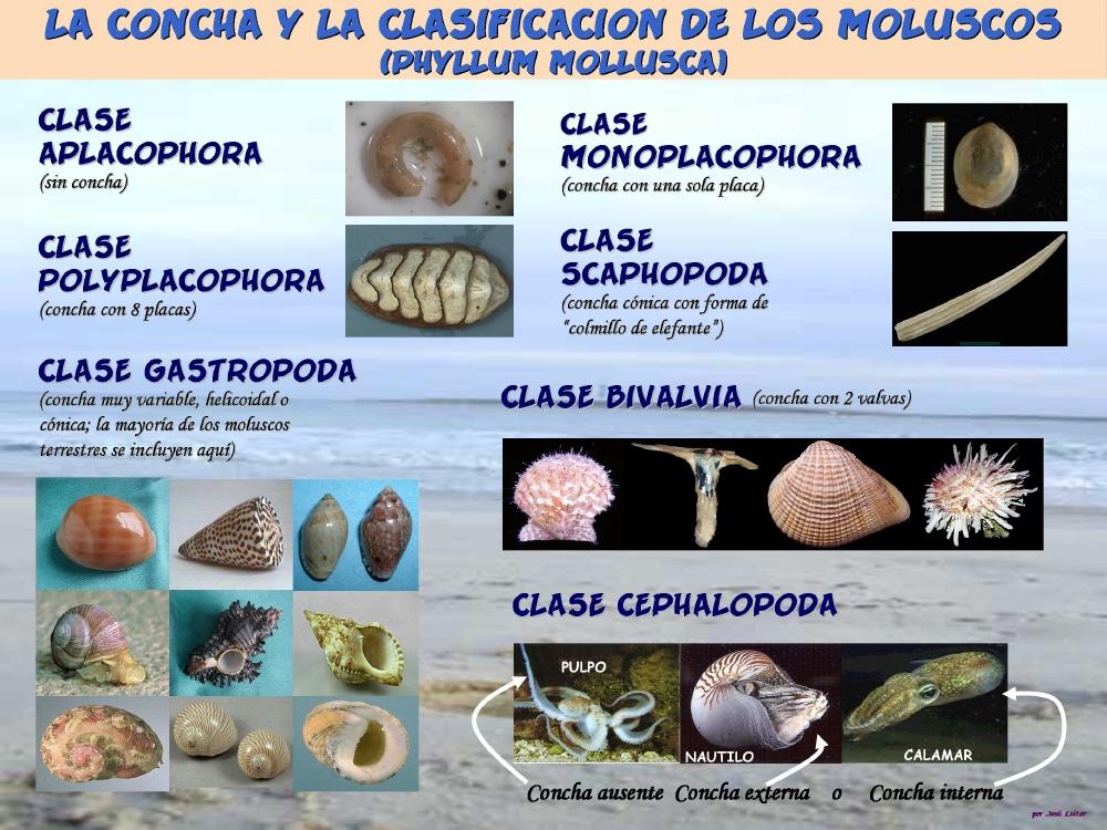 ÎNCRENGĂTURA MOLUSCA | chipriseanion |