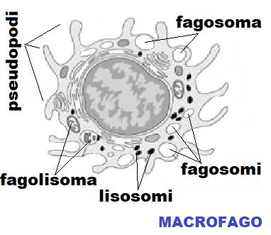 papilloma intraduttale e gravidanza)