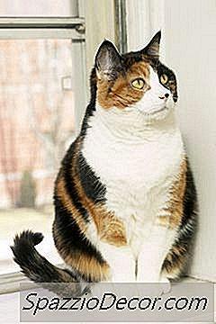 giardia em gatos)