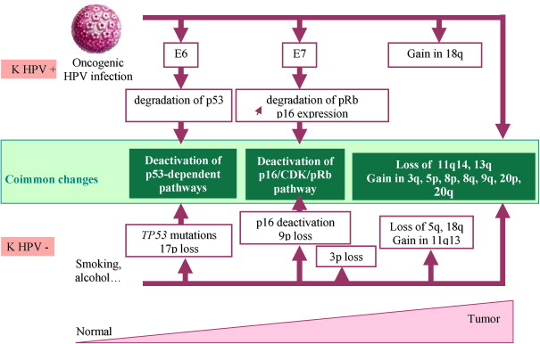 hpv associated with head and neck cancer)