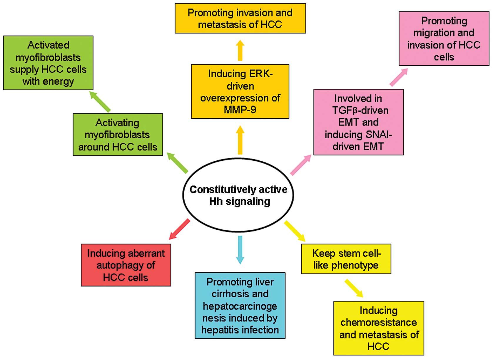 Rectal cancer hcc, Scientific Publications