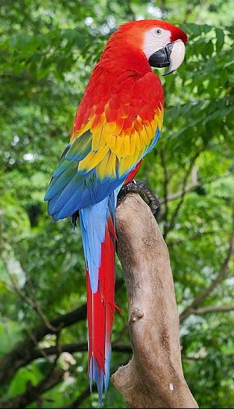 nematod de papagal