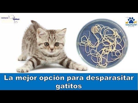 oxiuros en gatos sintomas