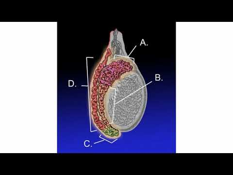 papiloma intraductal que significa papillomavirus hpv 16 positif