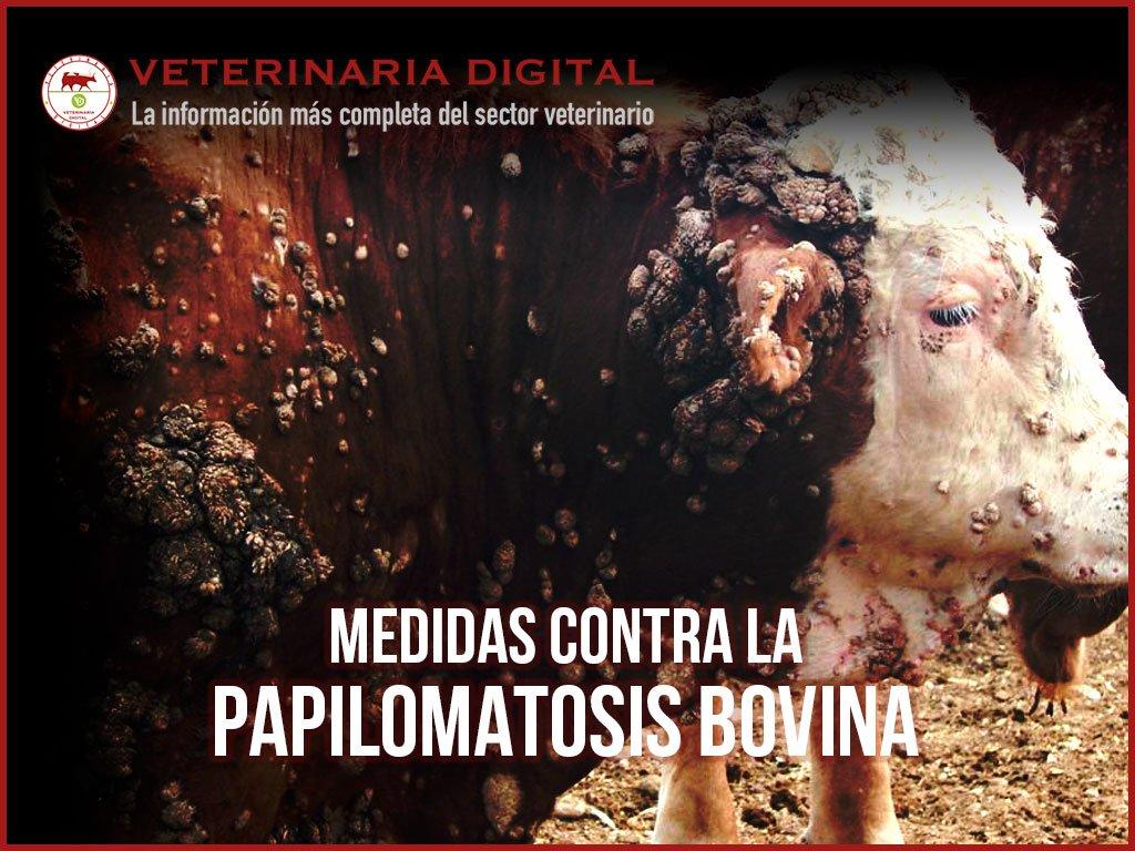 papilomatosis o verruga bovina