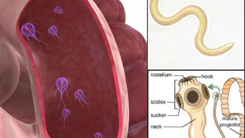 simptome umane pentru giardiază)