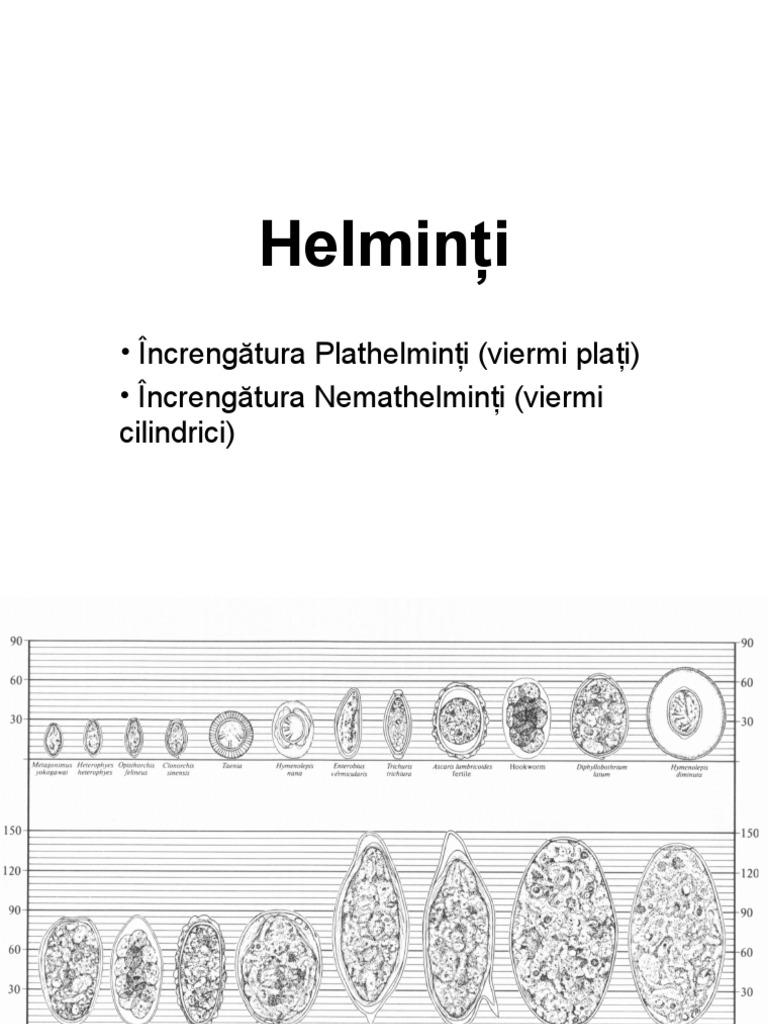 vierme rotunde umane pe scurt